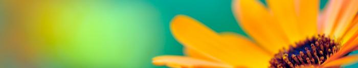 Yläkuvat-3-kukkaOK