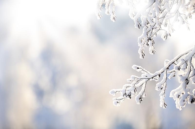Autuutta aivoille -retriitti luonnon sylissä Rääkkylässä on keidas talven keskellä